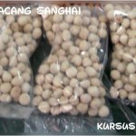 kacang sanghai(FILEminimizer)